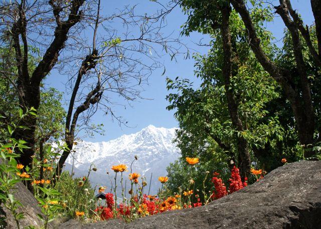 himalayan-spring.jpg